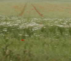 """Foto """"Farbfeld #2"""" von Zuckerwein Fotografie. Das Werk zeigt den einen Ausschnitt eines Feldes mit Blumen im Sommer, in Bewegung aufgenommen. Mehr siehe http://zuckerwein.com/"""