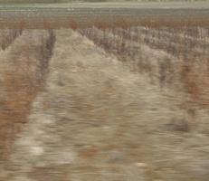 """Foto """"Farbfeld #6"""" von Zuckerwein Fotografie. Das Werk zeigt ein Feld im tuerkischen Hochland nahe Antalya im Fruehjahr, in Fahrt aufgenommen. Mehr siehe http://zuckerwein.com/"""